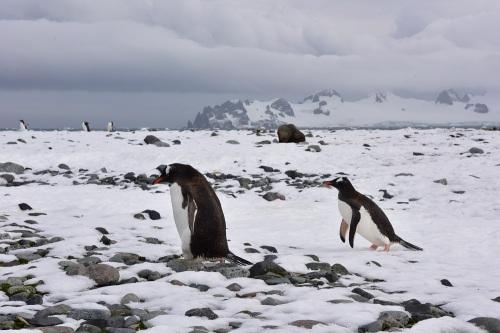 160313_南極_3