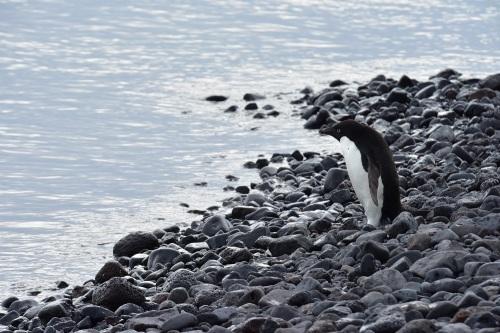 以我今次為例,我就帶上了一支 80-400 的鏡頭,這樣捕捉企鵝的神態就易多了。